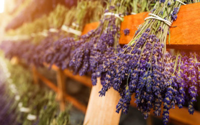 How to Use Lavender Essential Oil for Hair Growth: People Also Ask
